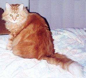 5 herramientas para quitar los pelos de gato de los - Como quitar los pelos de gato de la ropa ...