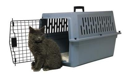 camiar residencia gato