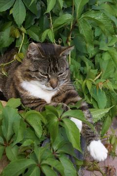 gato en planta