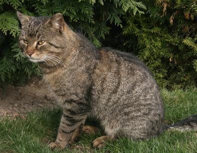 gato en jardin