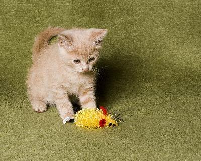 gatico jugando