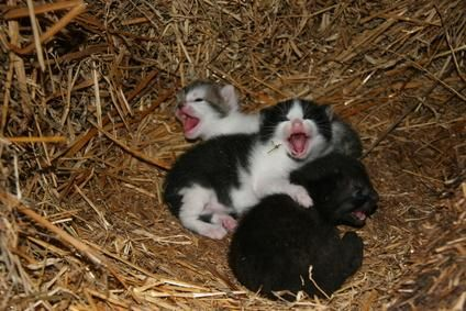 camada gaticos