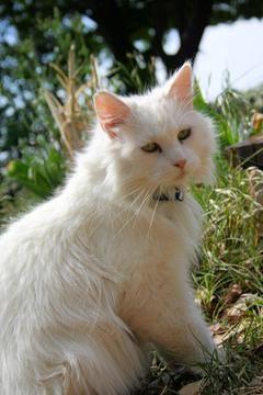 gato esteril