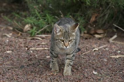 gato escapado