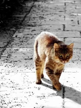 gato calle