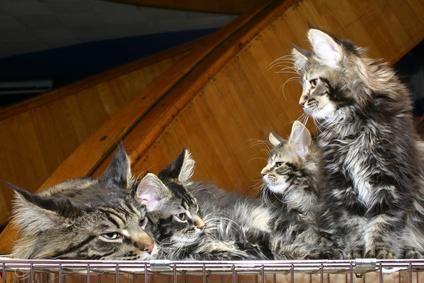 varios gaticos