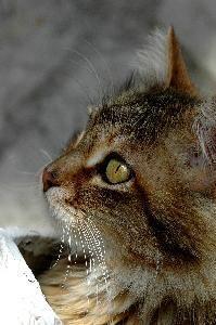 cara perfil de gatico