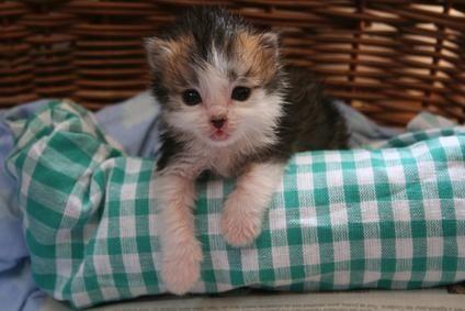 gatico en cama
