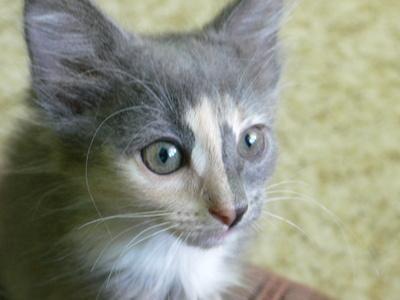 cara gatico