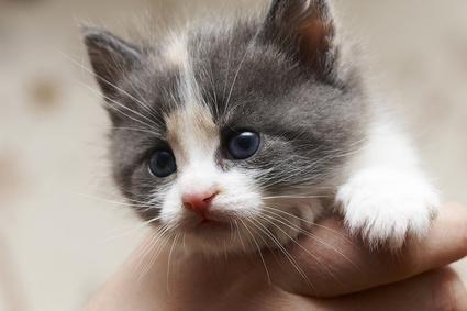 gatico en la mano