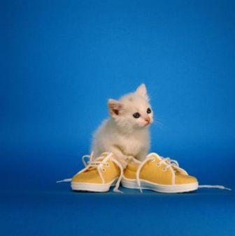 gatico y zapatos