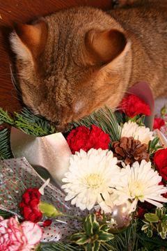 crisantemo y gato