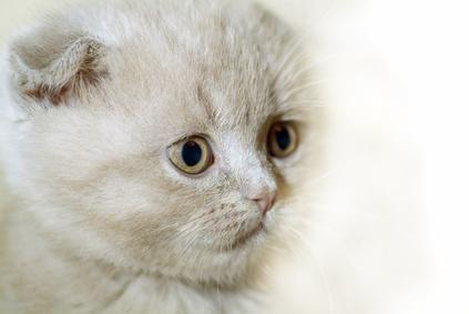linda cara perfil de gato