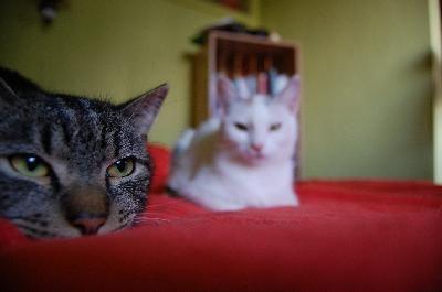 dos gatos en una cama