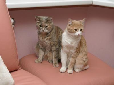 dos gatos en asiento