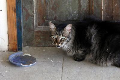 gato en puerta