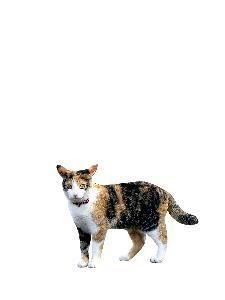 gato fondo blanco