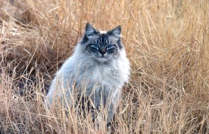 gato pasto
