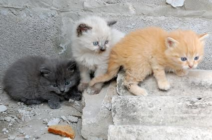 gaticos jugando