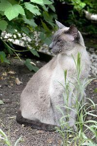 Lista de plantas y hierbas seguras para los gatos gatospedia Plantas seguras para gatos