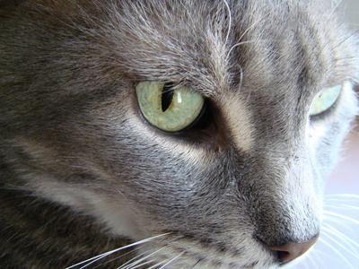 cara de gato de perfil