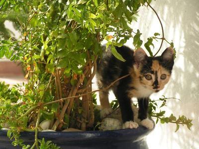 Hierbas t xicas para los gatos gatospedia for Plantas toxicas gatos