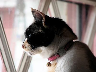 gato en interior