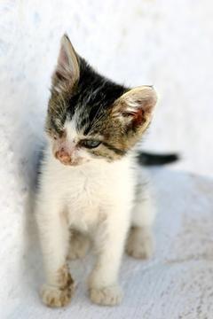 gatico en superficie blanda blanca