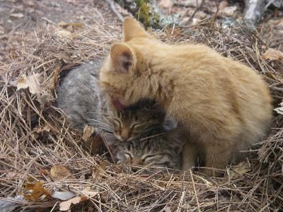 gaticos acicalandose