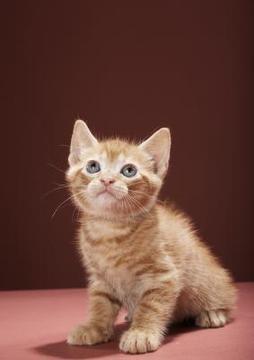 gatico mirando arriba