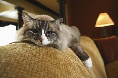 acostado sofa
