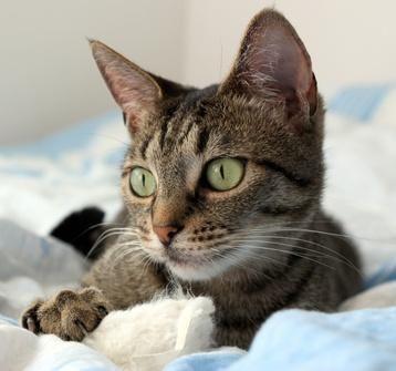 gato en cama enfermo