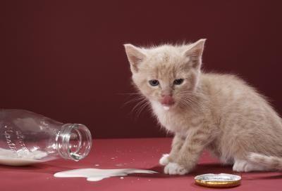 gatico leche
