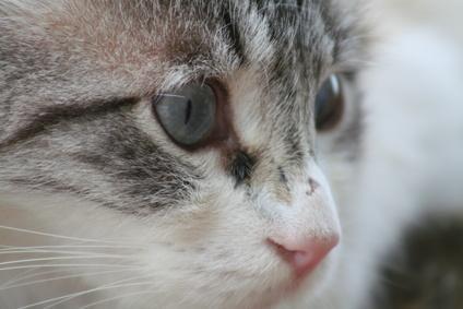 ojos cara gato