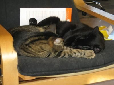 dos gatos acostados silla
