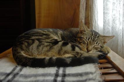 gato durmiendo dormido