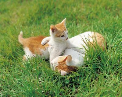 jatos jugando hierba