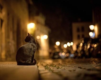 gato-noche