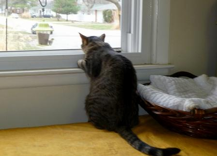 mirando-ventana